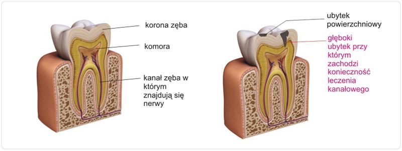 https://stomatolog-krzeszowice.pl/wp-content/uploads/2021/03/zab.jpg